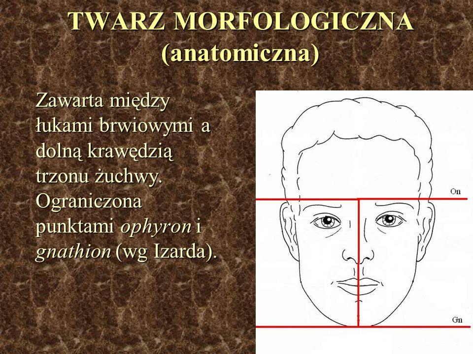 TWARZ MORFOLOGICZNA (anatomiczna) Zawarta między łukami brwiowymi a dolną krawędzią trzonu żuchwy. Ograniczona punktami ophyron i gnathion (wg Izarda)