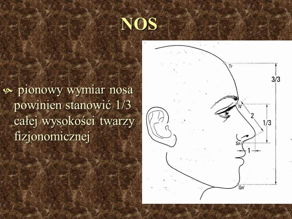NOS pionowy wymiar nosa powinien stanowić 1/3 całej wysokości twarzy fizjonomicznej pionowy wymiar nosa powinien stanowić 1/3 całej wysokości twarzy f