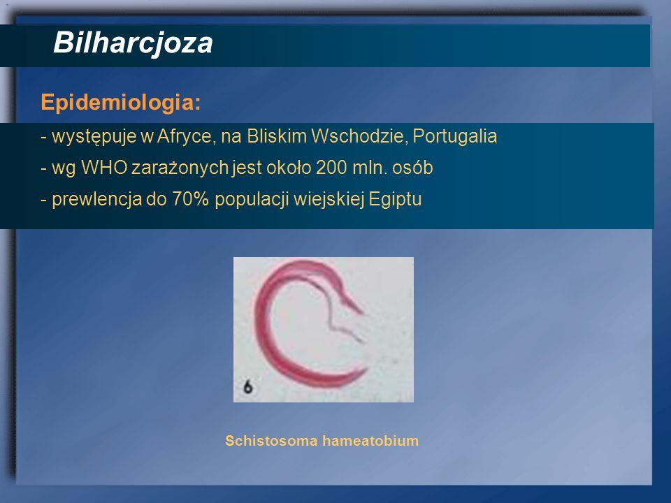 Bilharcjoza Epidemiologia: - występuje w Afryce, na Bliskim Wschodzie, Portugalia - wg WHO zarażonych jest około 200 mln. osób - prewlencja do 70% pop