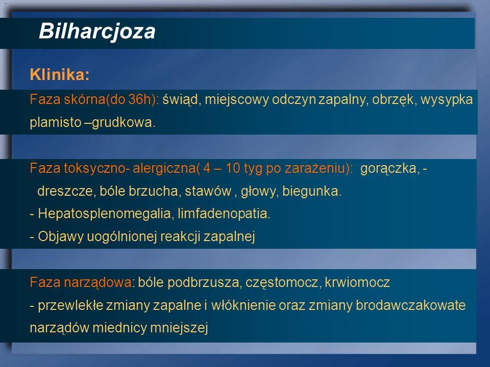 Bilharcjoza Klinika: Faza skórna(do 36h): świąd, miejscowy odczyn zapalny, obrzęk, wysypka plamisto –grudkowa. Faza toksyczno- alergiczna( 4 – 10 tyg