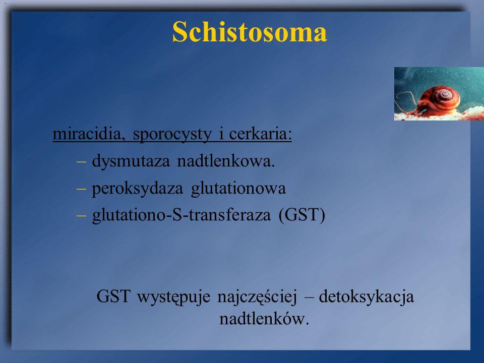 Schistosomoza Diagnostyka: - badanie: moczu na obecność jaj (osad z dobowej zbiórki) S haematobium, S.