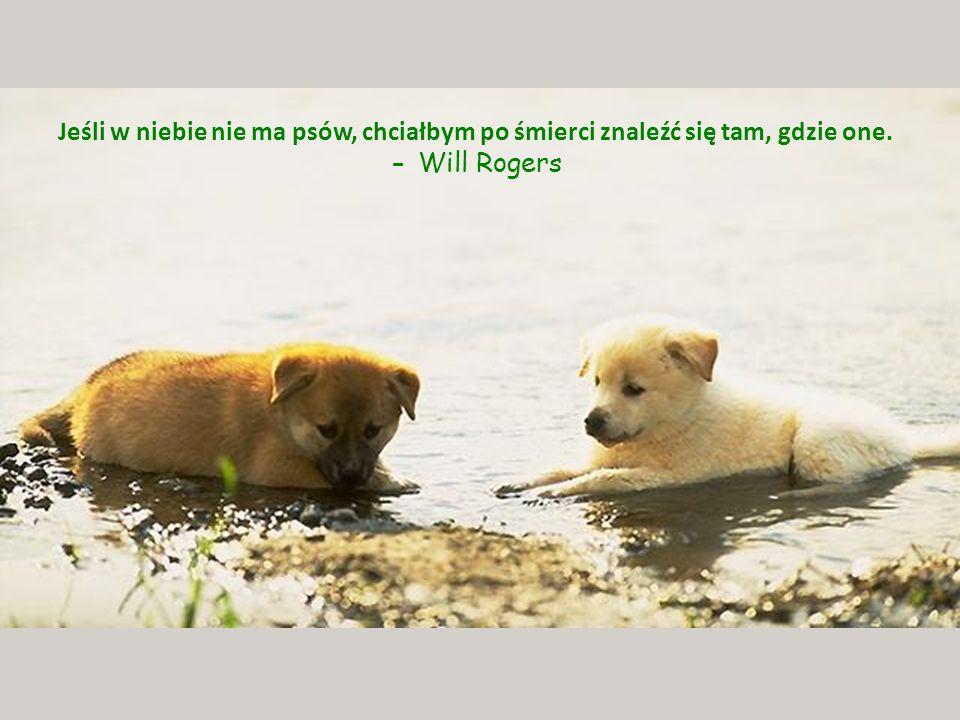 Psy mają tylu przyjaciół ponieważ machają ogonem a nie językiem.