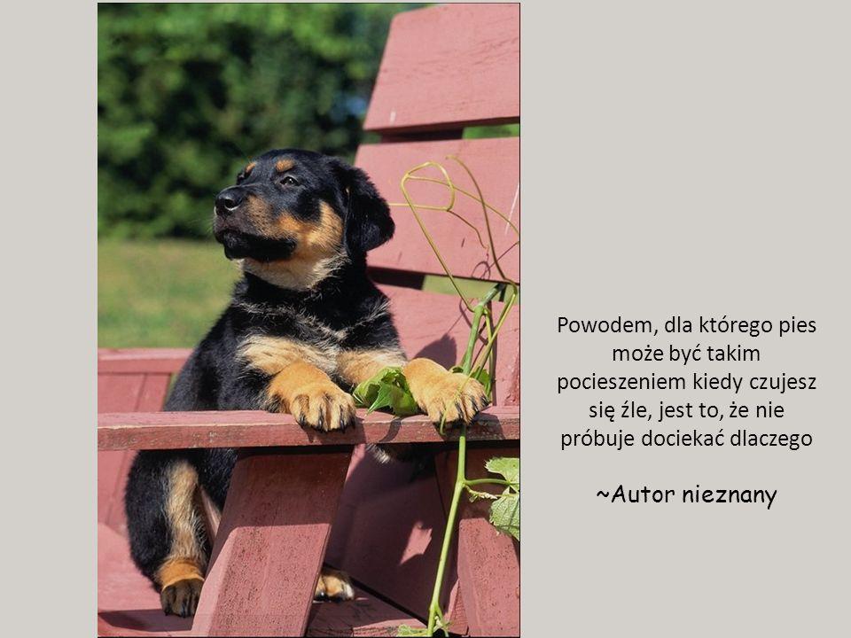 Powodem, dla którego pies może być takim pocieszeniem kiedy czujesz się źle, jest to, że nie próbuje dociekać dlaczego ~Autor nieznany