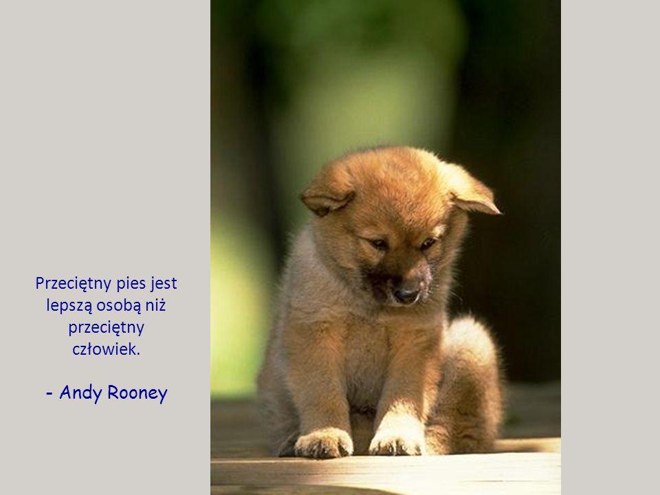 Przeciętny pies jest lepszą osobą niż przeciętny człowiek. - Andy Rooney