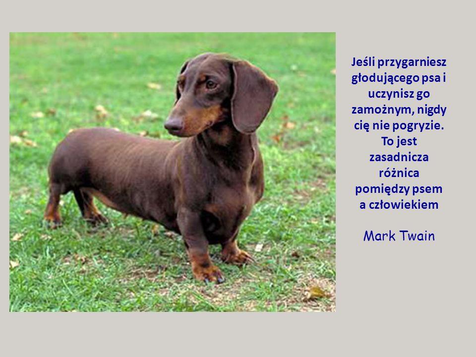 Najbardziej tkliwym stworzeniem, jest mokry pies. ~Ambrose Bierce