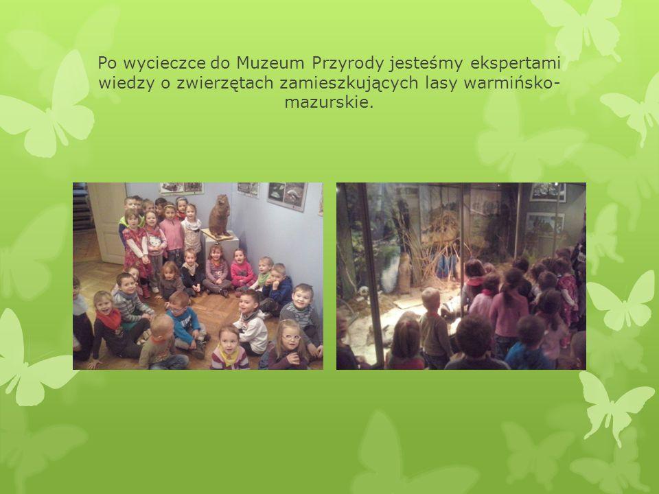 Po wycieczce do Muzeum Przyrody jesteśmy ekspertami wiedzy o zwierzętach zamieszkujących lasy warmińsko- mazurskie.
