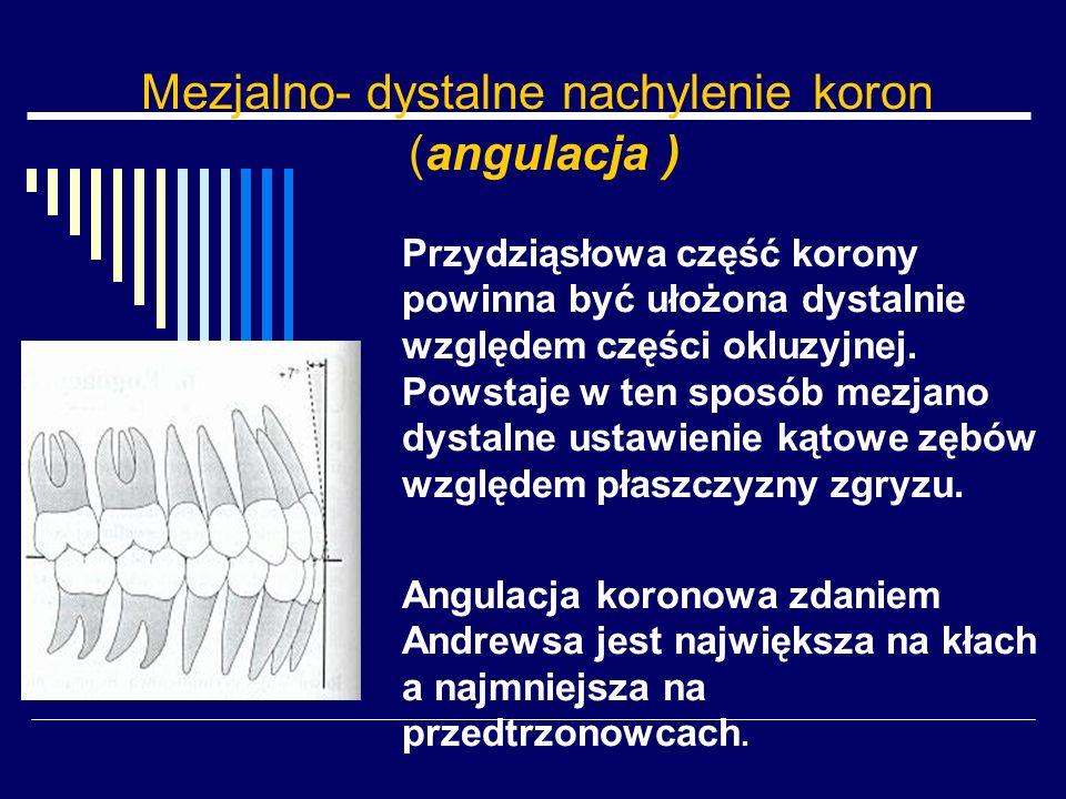 Mezjalno- dystalne nachylenie koron (angulacja ) Przydziąsłowa część korony powinna być ułożona dystalnie względem części okluzyjnej. Powstaje w ten s