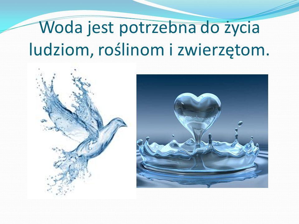 Woda jest potrzebna do życia ludziom, roślinom i zwierzętom.
