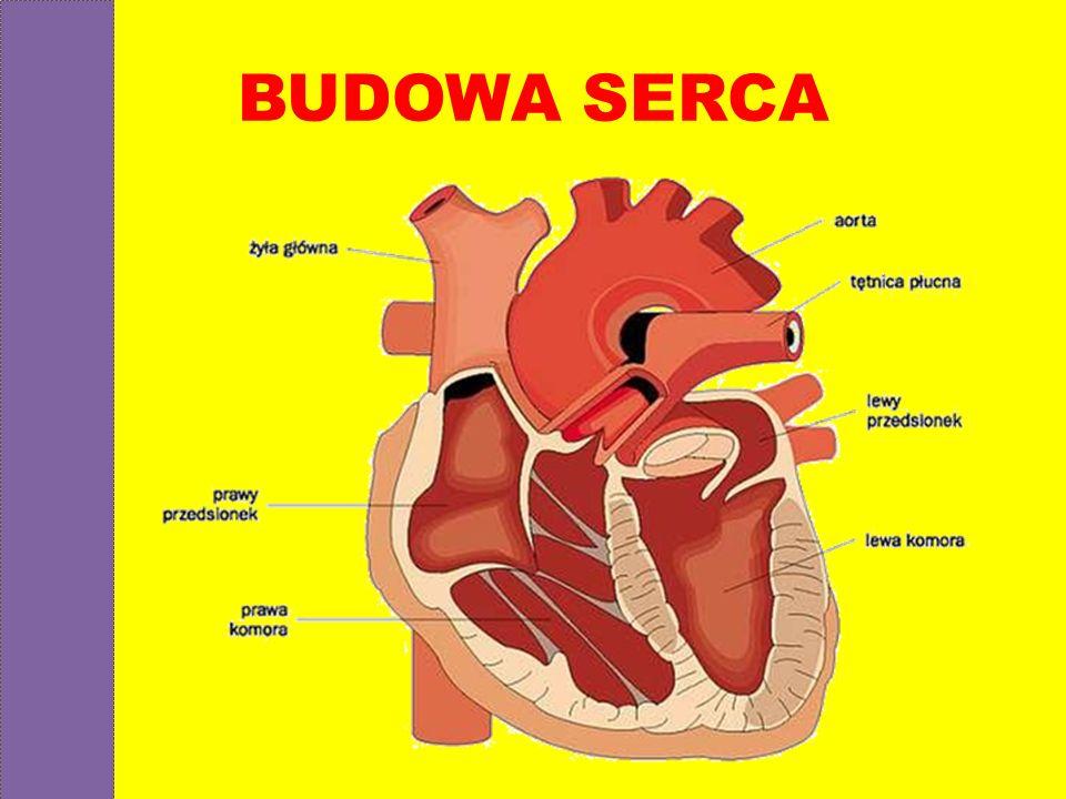 BUDOWA SERCA