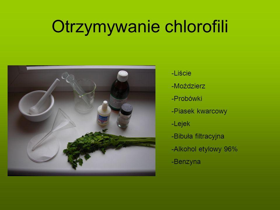 Otrzymywanie chlorofili -Liście -Moździerz -Probówki -Piasek kwarcowy -Lejek -Bibuła filtracyjna -Alkohol etylowy 96% -Benzyna