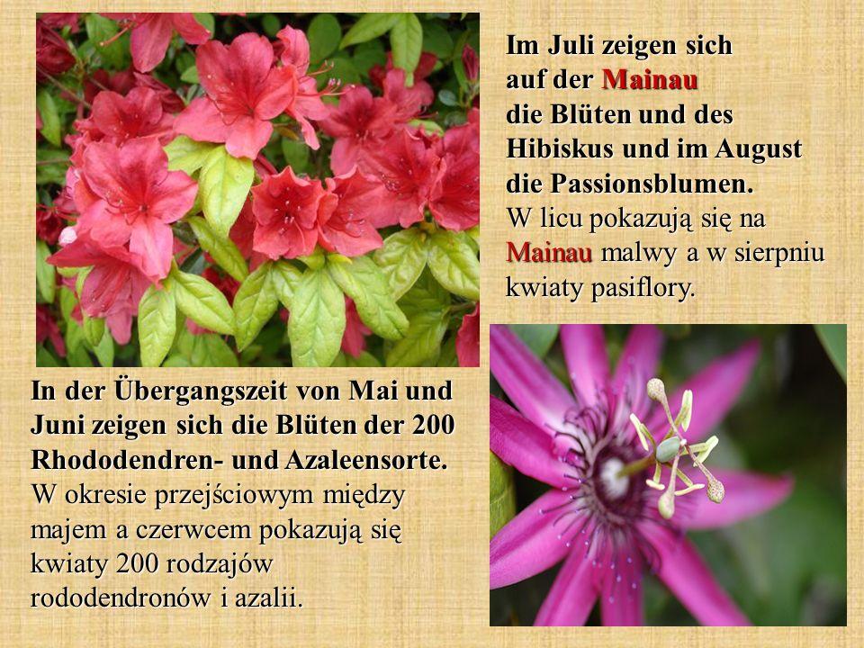 In der Übergangszeit von Mai und Juni zeigen sich die Blüten der 200 Rhododendren- und Azaleensorte. W okresie przejściowym między majem a czerwcem po