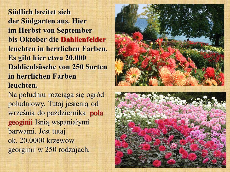 Südlich breitet sich der Südgarten aus. Hier im Herbst von September bis Oktober die Dahlienfelder leuchten in herrlichen Farben. Es gibt hier etwa 20