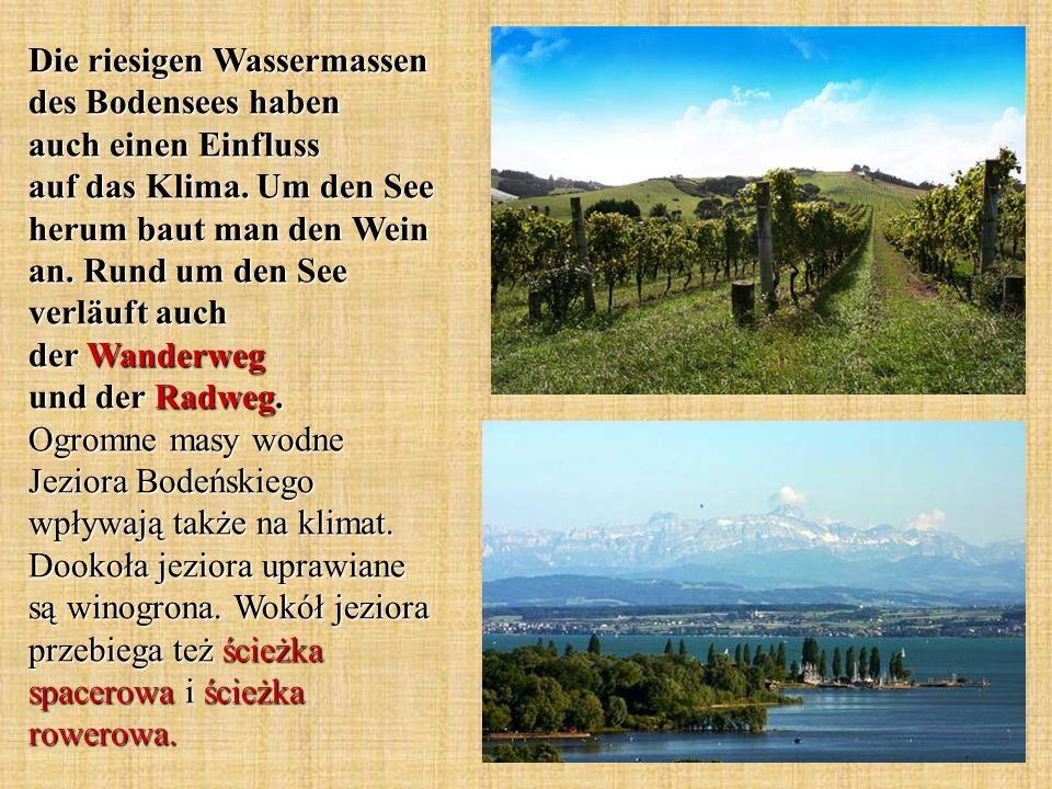 Die riesigen Wassermassen des Bodensees haben auch einen Einfluss auf das Klima. Um den See herum baut man den Wein an. Rund um den See verläuft auch