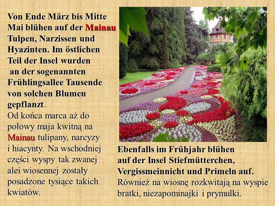 Von Ende März bis Mitte Mai blühen auf der Mainau Tulpen, Narzissen und Hyazinten. Im östlichen Teil der Insel wurden an der sogenannten Frühlingsalle