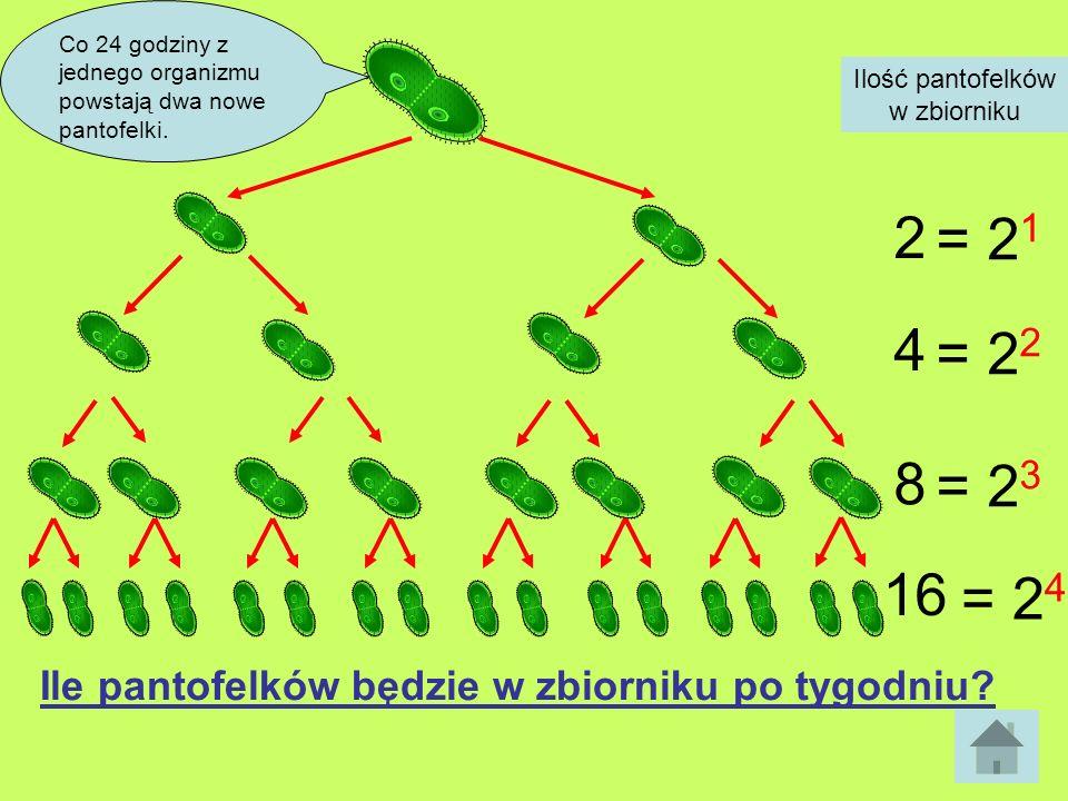 Co 24 godziny z jednego organizmu powstają dwa nowe pantofelki. Ilość pantofelków w zbiorniku 2 4 8 16 = 2 1 = 2 2 = 2 3 = 2 4 Ile pantofelków będzie