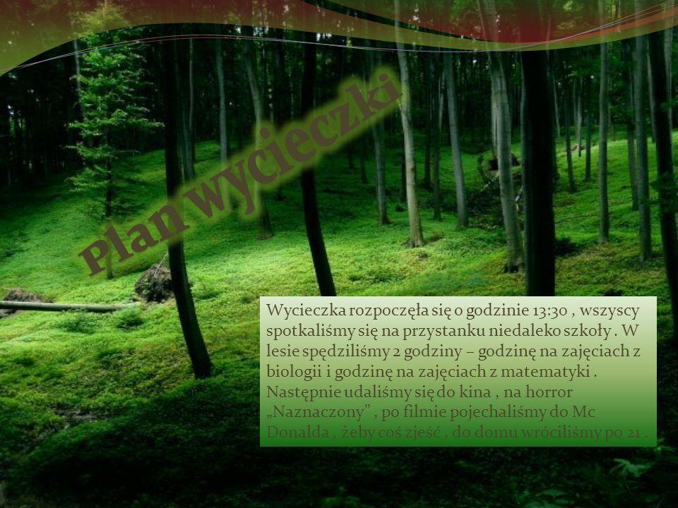Wycieczka do lasu…