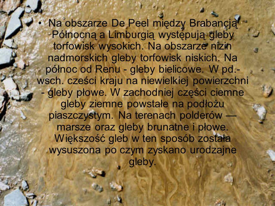 Na obszarze De Peel między Brabancją Północną a Limburgią występują gleby torfowisk wysokich. Na obszarze nizin nadmorskich gleby torfowisk niskich. N