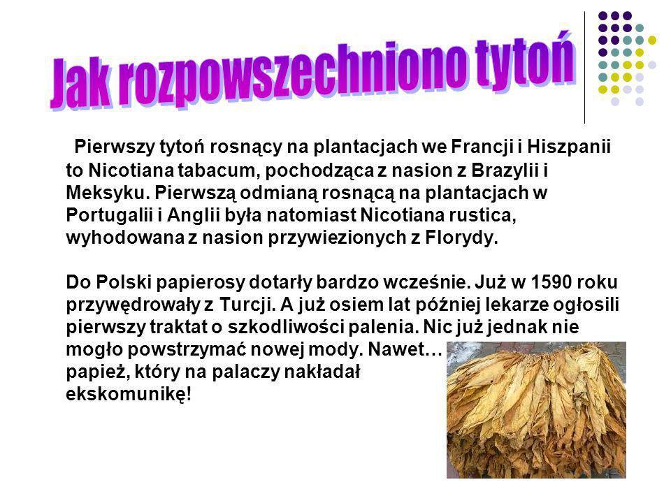 Pierwszy tytoń rosnący na plantacjach we Francji i Hiszpanii to Nicotiana tabacum, pochodząca z nasion z Brazylii i Meksyku. Pierwszą odmianą rosnącą
