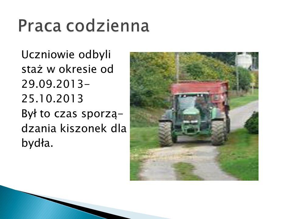 Uczniowie odbyli staż w okresie od 29.09.2013- 25.10.2013 Był to czas sporzą- dzania kiszonek dla bydła.