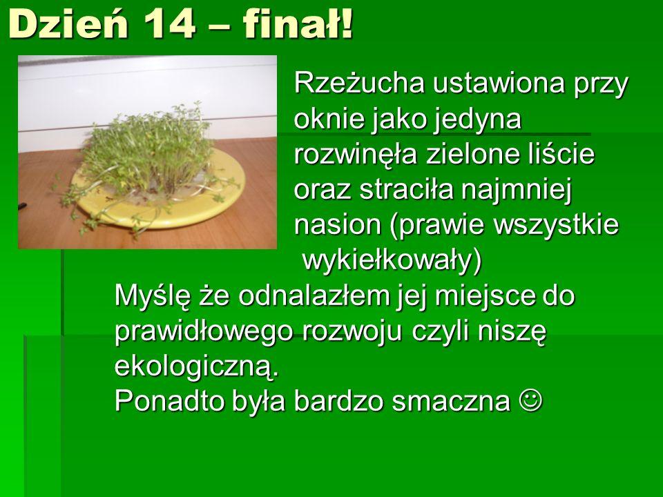 Dzień 14 – finał! Rzeżucha ustawiona przy oknie jako jedyna rozwinęła zielone liście oraz straciła najmniej nasion (prawie wszystkie wykiełkowały) Myś