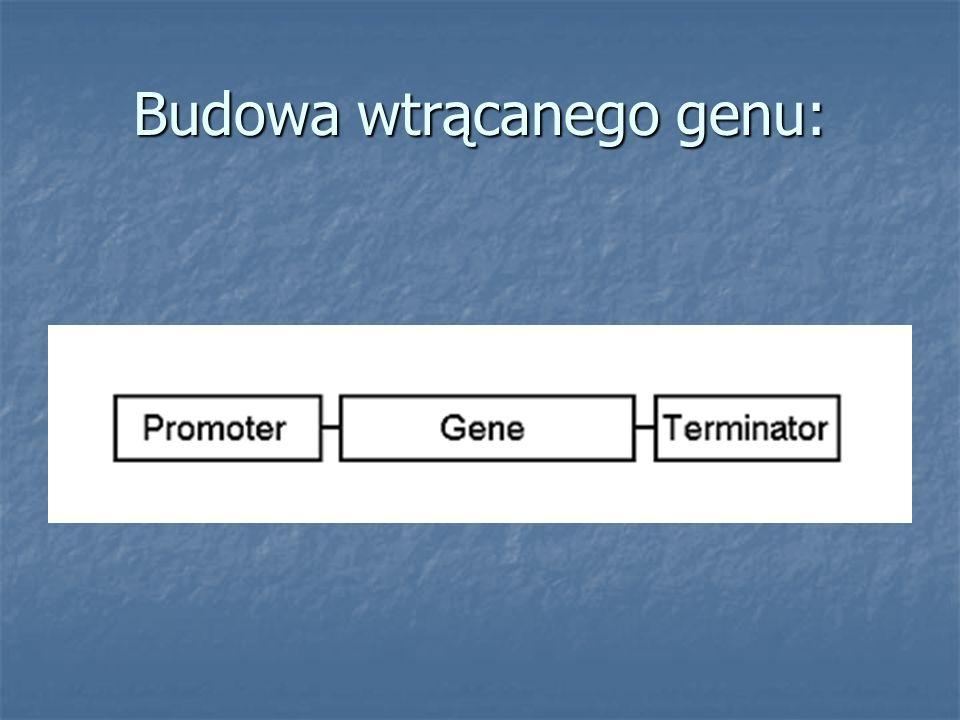 Budowa wtrącanego genu: