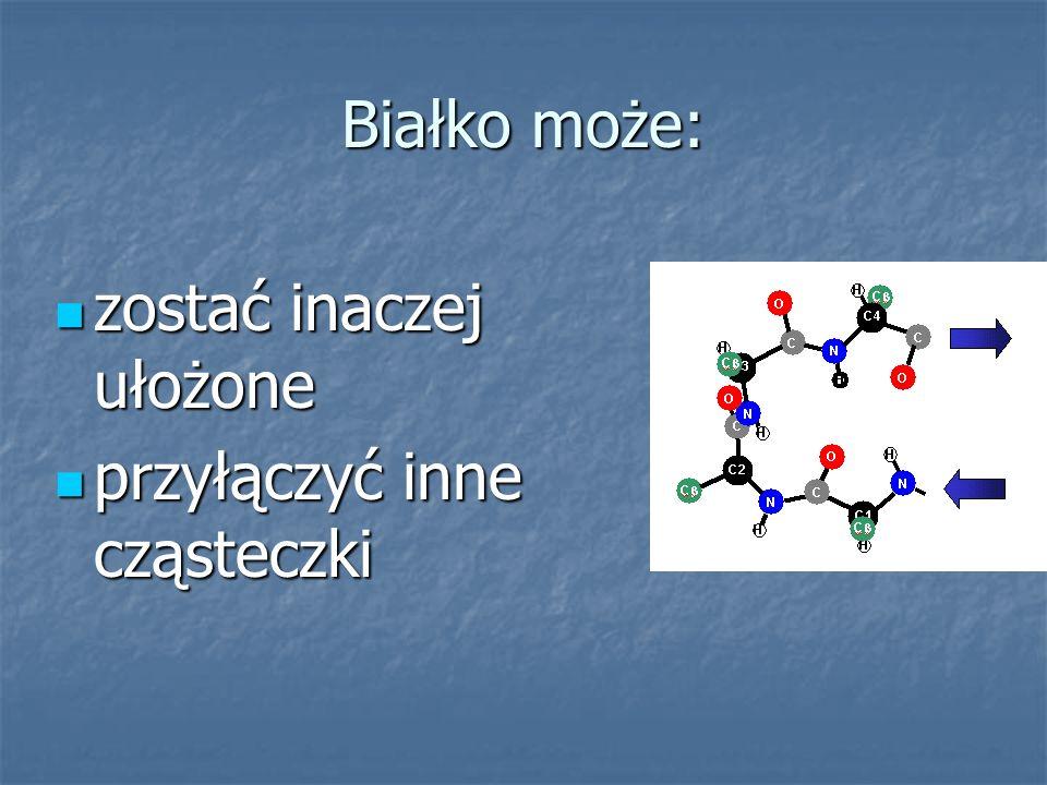 Białko może: zostać inaczej ułożone zostać inaczej ułożone przyłączyć inne cząsteczki przyłączyć inne cząsteczki
