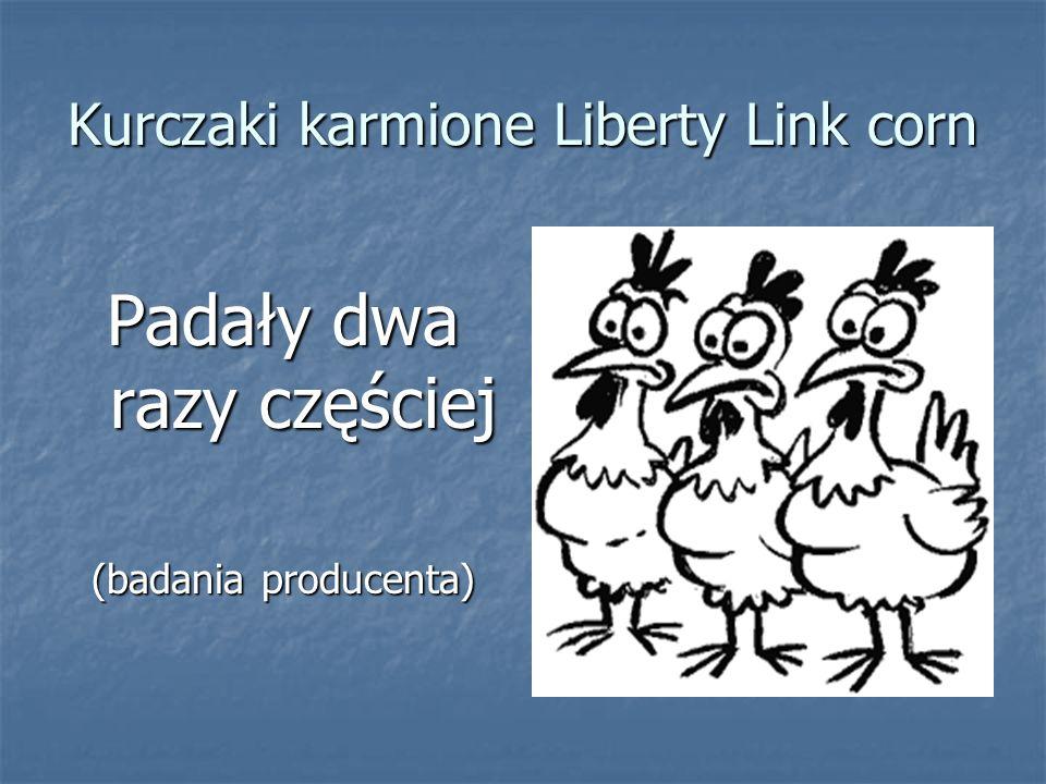 Kurczaki karmione Liberty Link corn Padały dwa razy częściej (badania producenta)