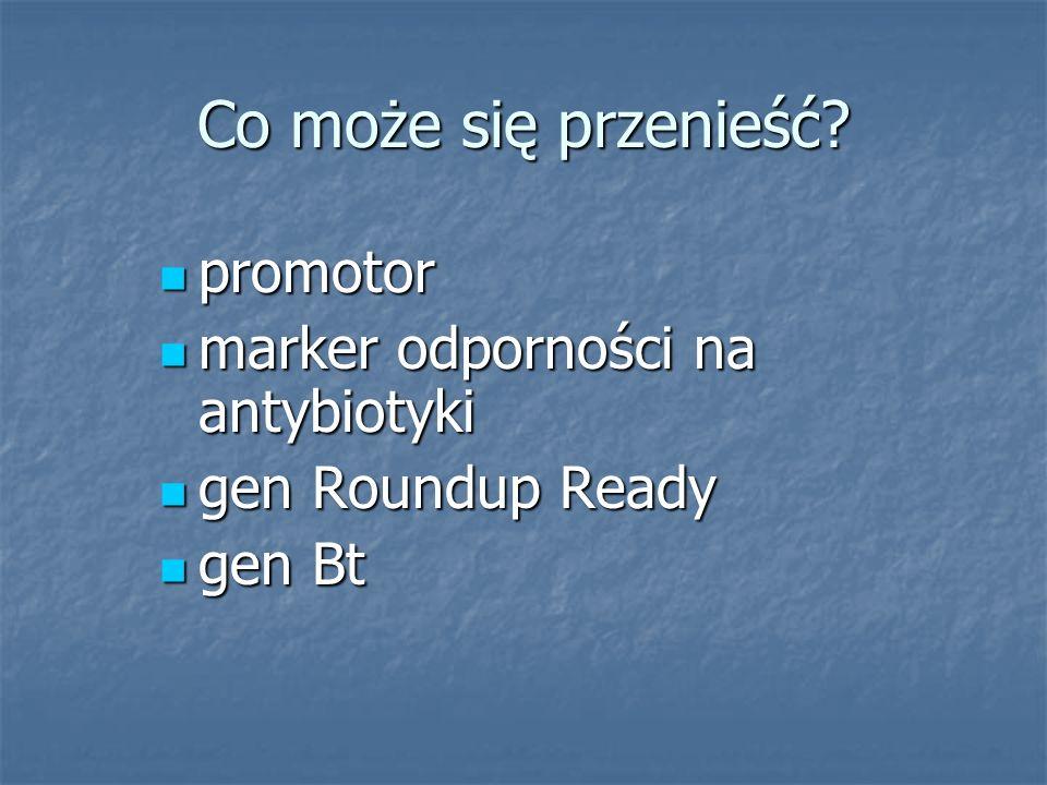 Co może się przenieść? promotor promotor marker odporności na antybiotyki marker odporności na antybiotyki gen Roundup Ready gen Roundup Ready gen Bt