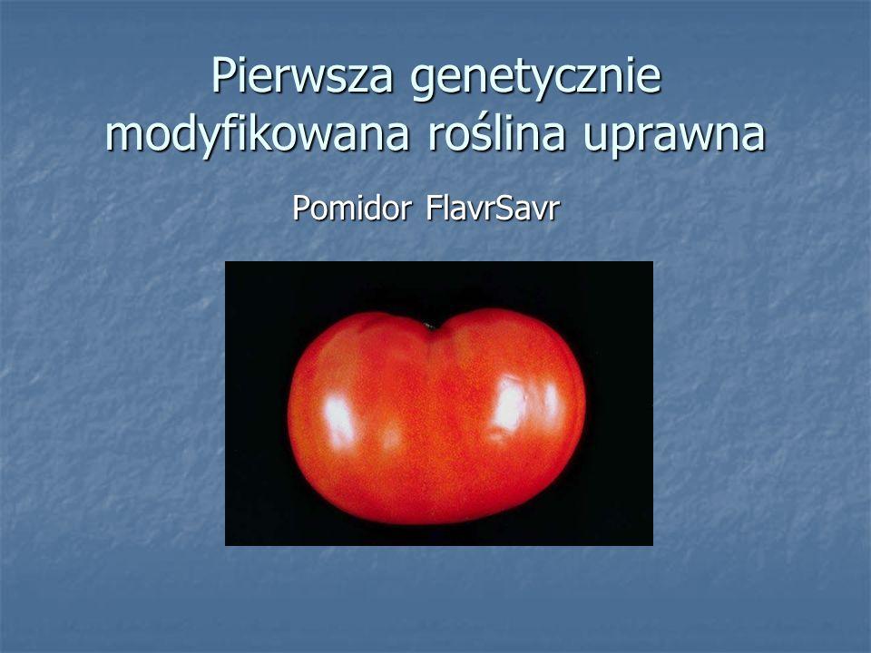 Pierwsza genetycznie modyfikowana roślina uprawna Pomidor FlavrSavr