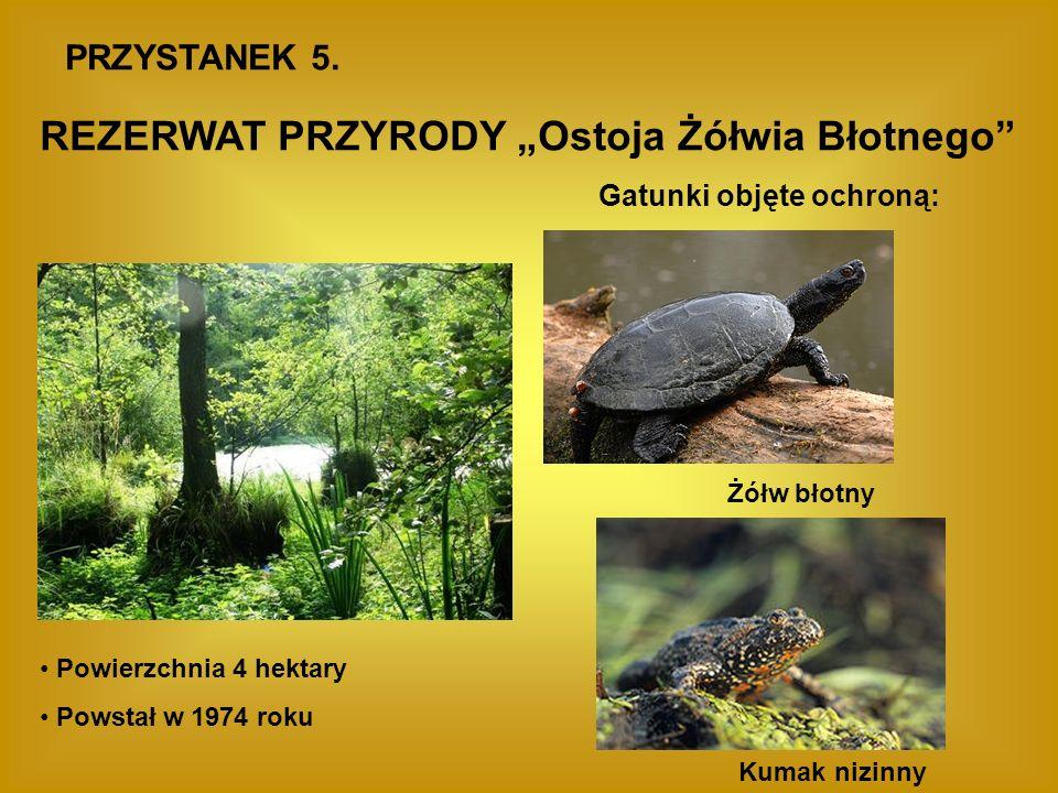 PRZYSTANEK 5. REZERWAT PRZYRODY Ostoja Żółwia Błotnego Powierzchnia 4 hektary Powstał w 1974 roku Gatunki objęte ochroną: Żółw błotny Kumak nizinny