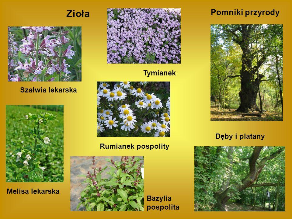 Pomniki przyrody Dęby i platany Zioła Szałwia lekarska Tymianek Rumianek pospolity Melisa lekarska Bazylia pospolita