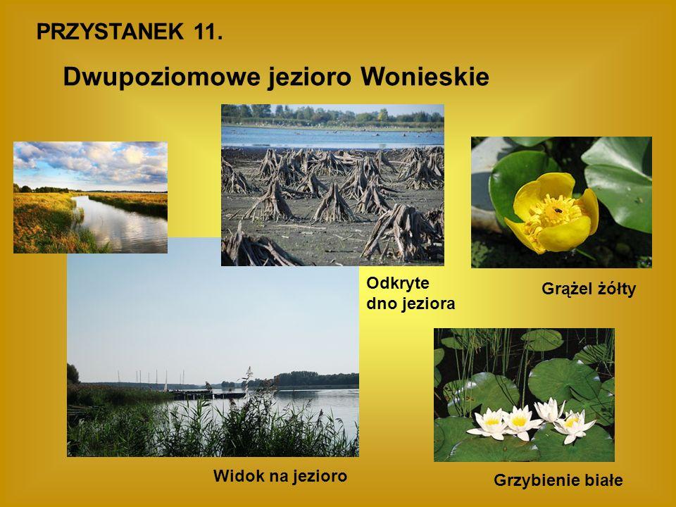 PRZYSTANEK 11. Dwupoziomowe jezioro Wonieskie Widok na jezioro Odkryte dno jeziora Grążel żółty Grzybienie białe