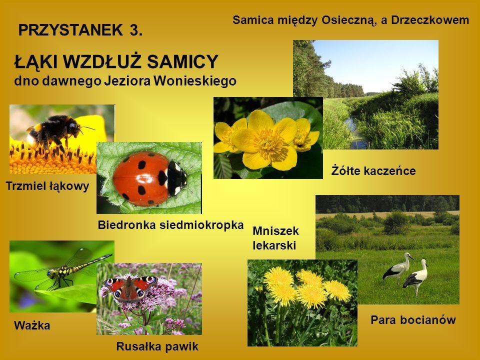 Zwierzęta z załącznika II dyrektywy siedliskowej Kumak nizinny Żółw błotny Bóbr europejski Wydra