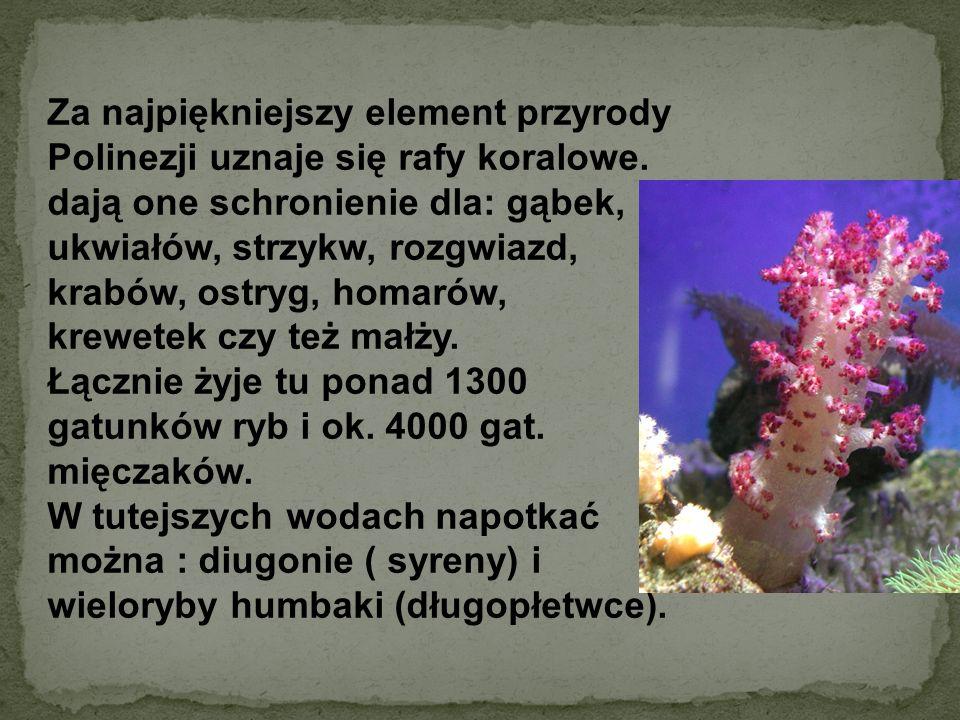 Za najpiękniejszy element przyrody Polinezji uznaje się rafy koralowe. dają one schronienie dla: gąbek, ukwiałów, strzykw, rozgwiazd, krabów, ostryg,