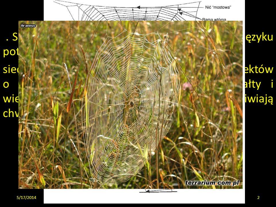 O sieciach. Sieć jest współcześnie pojęciem używanym w języku potocznym na oznaczenie wielu obiektów: sieci pajęczej, rybackiej lub łowieckiej, czyli