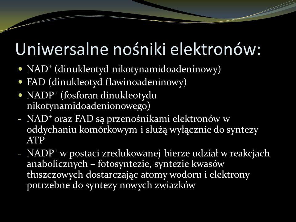 Uniwersalne nośniki elektronów: NAD + (dinukleotyd nikotynamidoadeninowy) FAD (dinukleotyd flawinoadeninowy) NADP + (fosforan dinukleotydu nikotynamid