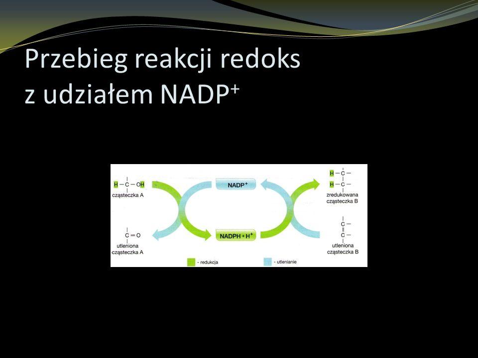 Przebieg reakcji redoks z udziałem NADP +