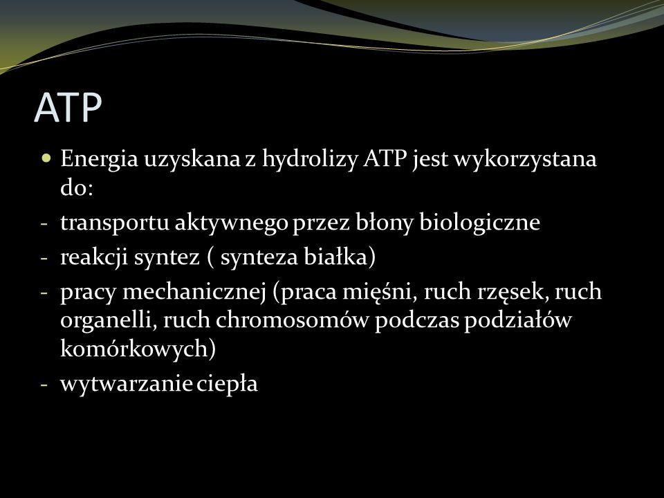ATP Energia uzyskana z hydrolizy ATP jest wykorzystana do: - transportu aktywnego przez błony biologiczne - reakcji syntez ( synteza białka) - pracy m