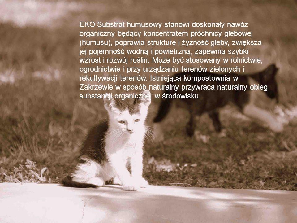 EKO Substrat humusowy stanowi doskonały nawóz organiczny będący koncentratem próchnicy glebowej (humusu), poprawia strukturę i żyzność gleby, zwiększa