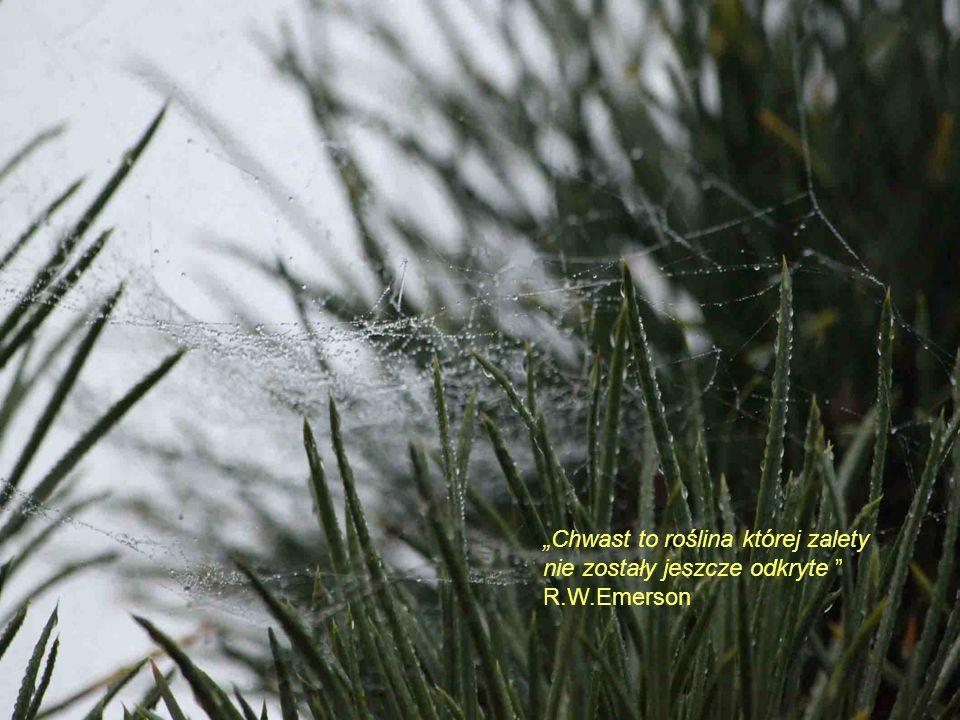 Chwast to roślina której zalety nie zostały jeszcze odkryte R.W.Emerson