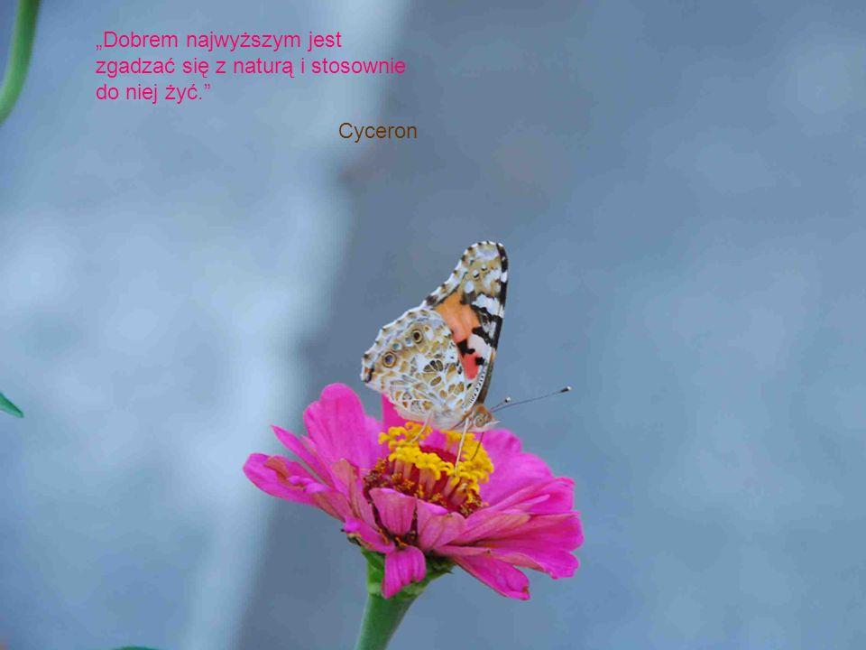 Dobrem najwyższym jest zgadzać się z naturą i stosownie do niej żyć. Cyceron