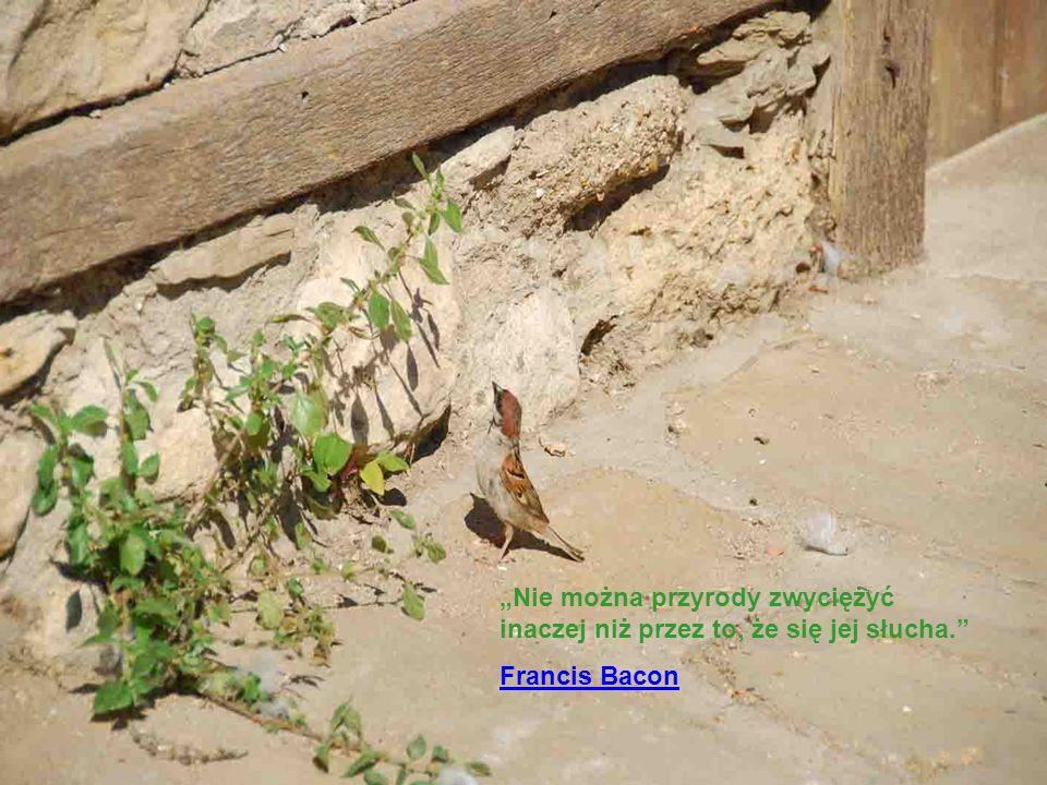 Nie można przyrody zwyciężyć inaczej niż przez to, że się jej słucha. Francis Bacon