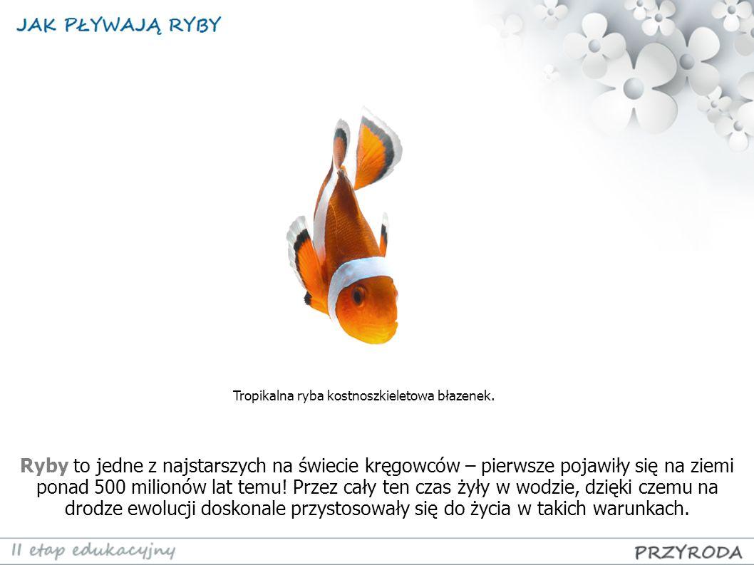 Ryby to jedne z najstarszych na świecie kręgowców – pierwsze pojawiły się na ziemi ponad 500 milionów lat temu! Przez cały ten czas żyły w wodzie, dzi