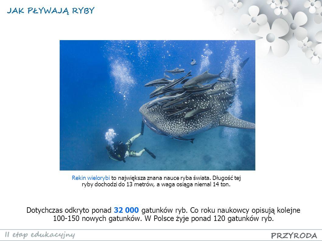 Ryby są bardzo różne – niektóre maja zaledwie centymetr, inne osiągają ponad 10 metrów.