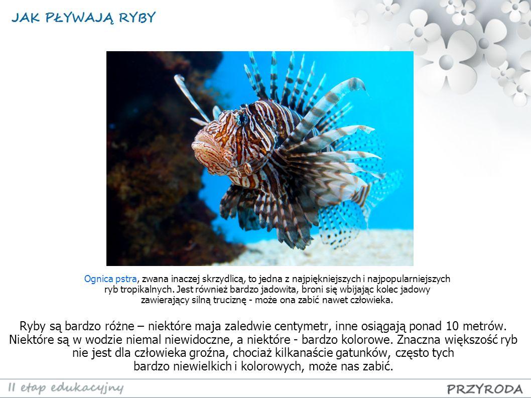Ryby są bardzo różne – niektóre maja zaledwie centymetr, inne osiągają ponad 10 metrów. Niektóre są w wodzie niemal niewidoczne, a niektóre - bardzo k