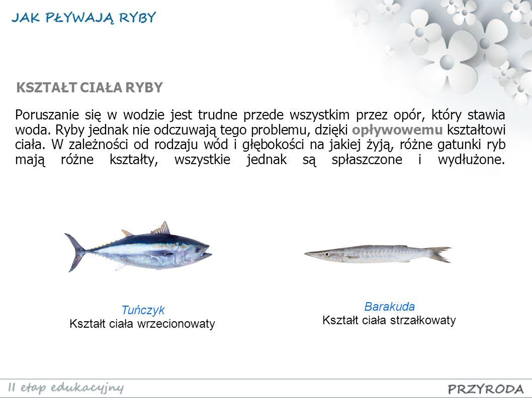 Poruszanie się w wodzie jest trudne przede wszystkim przez opór, który stawia woda. Ryby jednak nie odczuwają tego problemu, dzięki opływowemu kształt