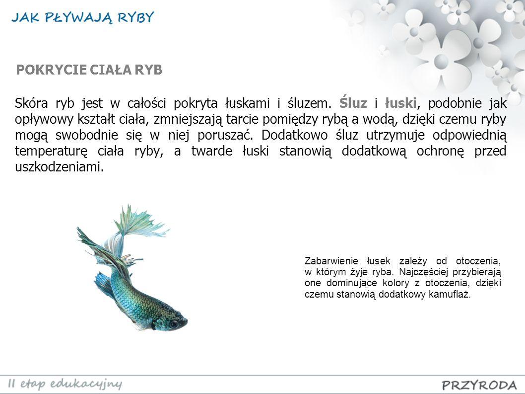 PŁETWY Głównym zadaniem płetw jest sterowanie oraz utrzymywanie prawidłowego położenia ciała ryby.
