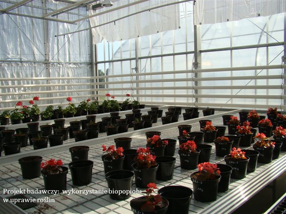 Projekt badawczy: wykorzystanie biopopiołu w uprawie roślin