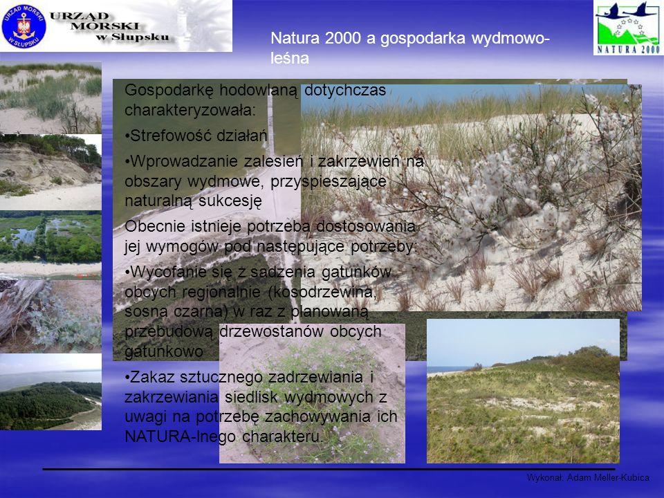 Wykonał: Adam Meller-Kubica Natura 2000 a gospodarka wydmowo- leśna Gospodarkę hodowlaną dotychczas charakteryzowała: Strefowość działań Wprowadzanie