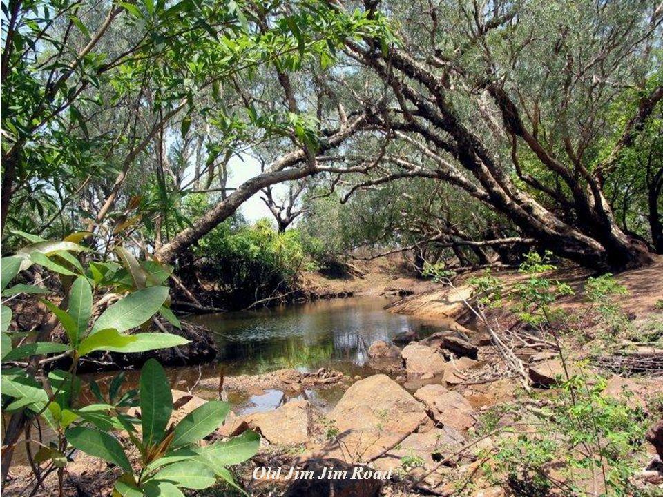 W parku Kakadu żyje około 25 gatunków żab, 60 gatunków ssaków, 51 gatunków ryb słodkowodnych, 120 gatunków gadów, 280 gatunków ptaków (z czego jedna t